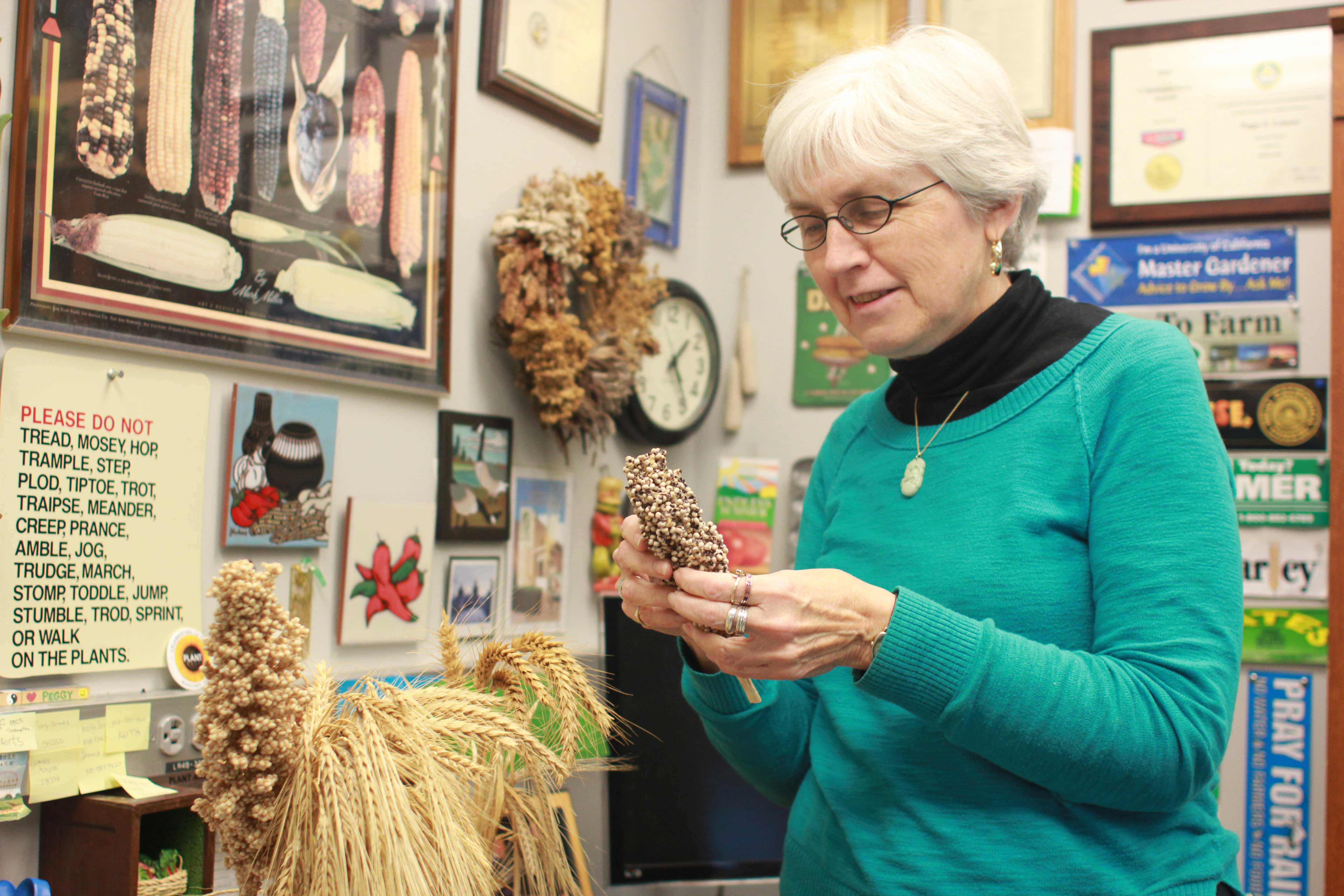 Peggy Lemaux holding some grains in her office.