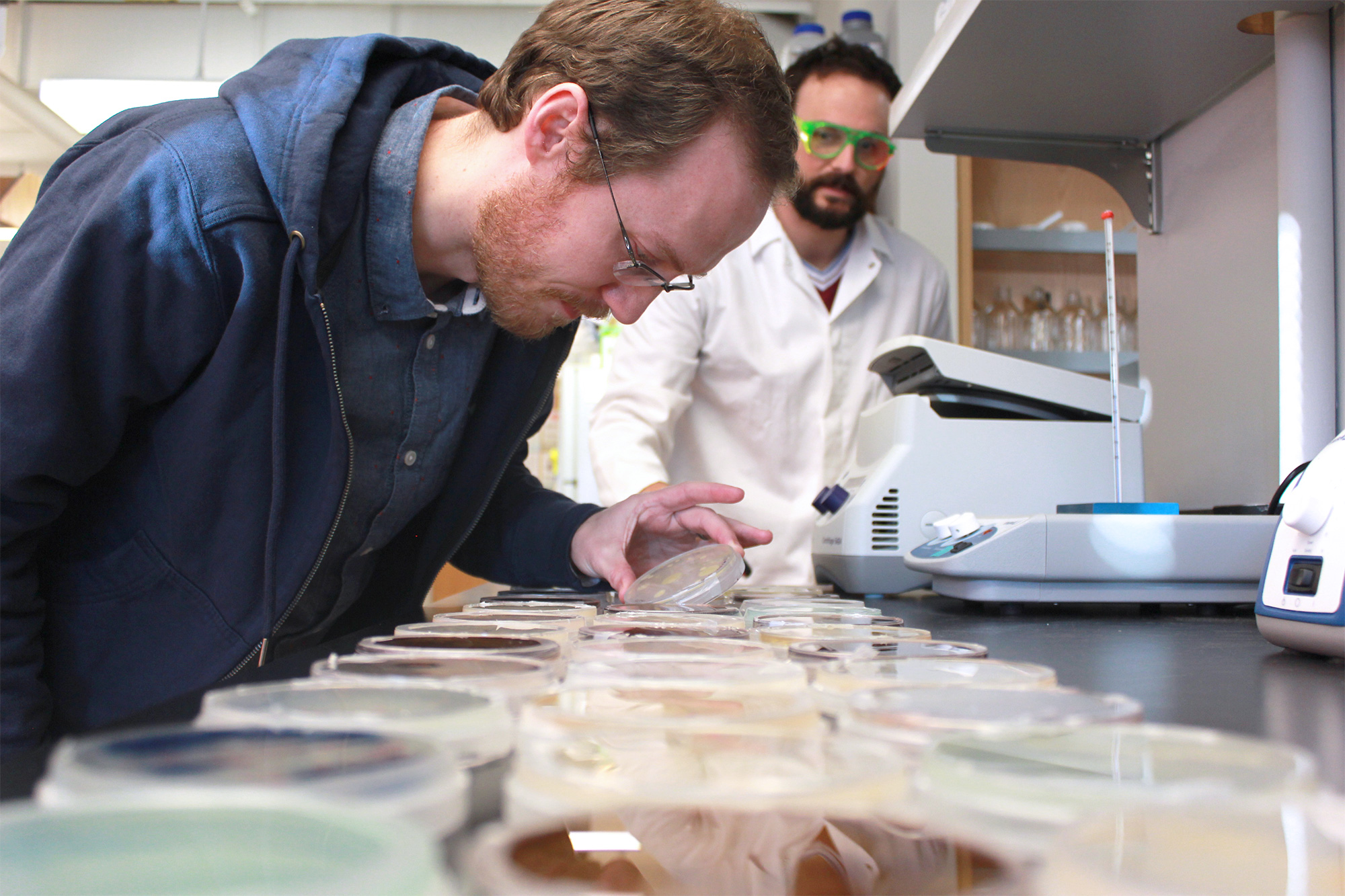 Researchers looking at petri dishes