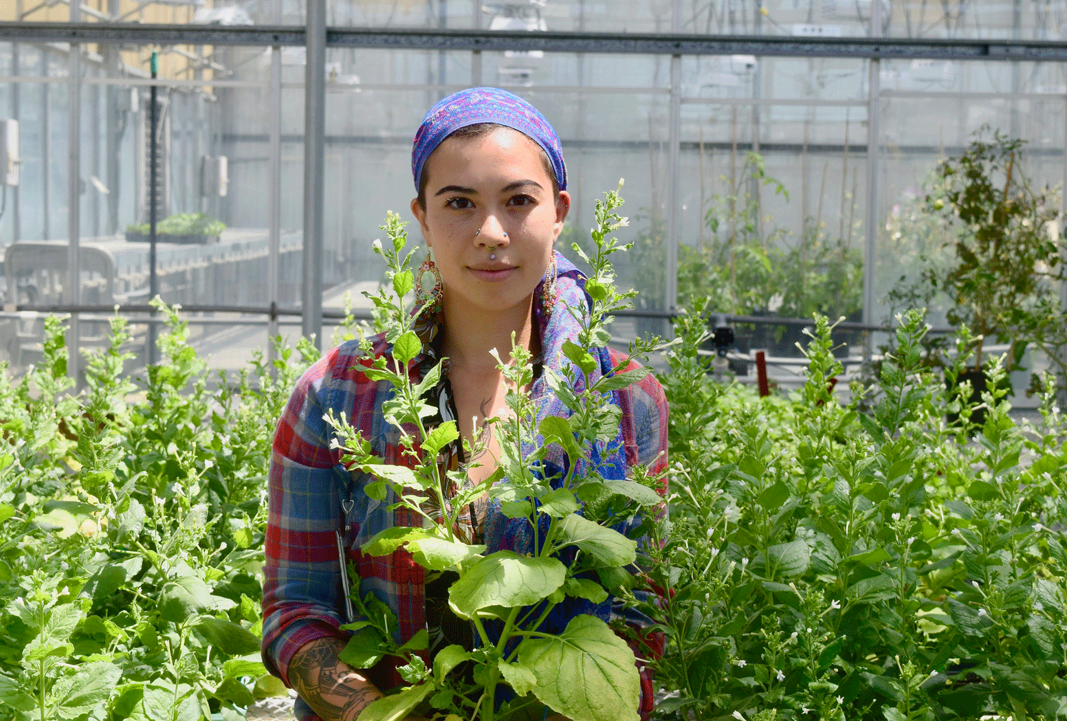 A young person standing in a greenhouse with research plants