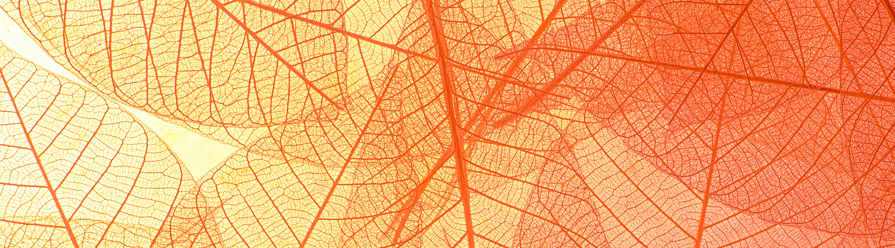 an artistic image of outlines of leaves in orange and red